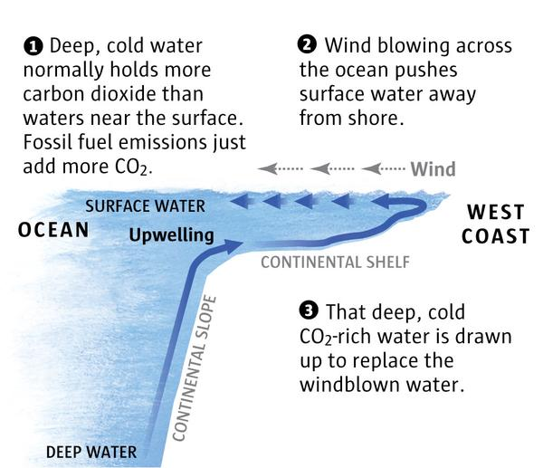 How 'upwelling' works
